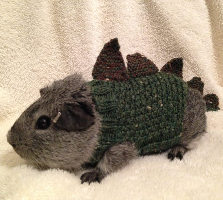 Free Knitting Pattern for Cavysaurus Rex Pet Costume
