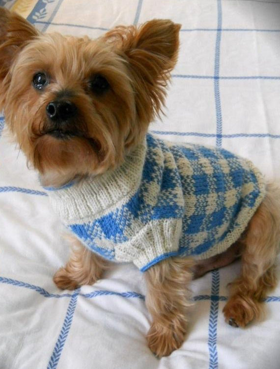 Pet Knitting Patterns In The Loop Knitting