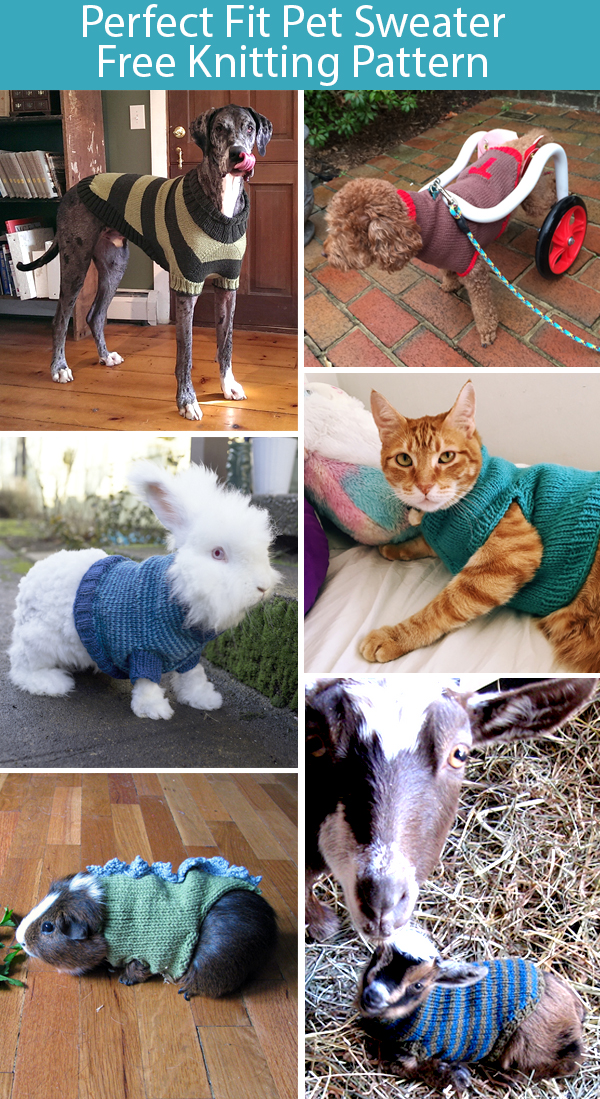 Free Knitting Pattern for Perfect Fit Pet Sweater