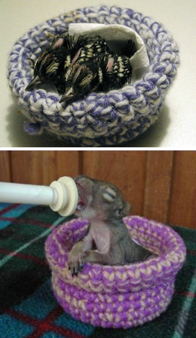 Free Knitting Pattern for Nests for Rescue Birds and Animals