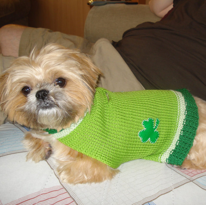 Knitting Pattern for St. Patrick's Day Shamrock Dog Sweater