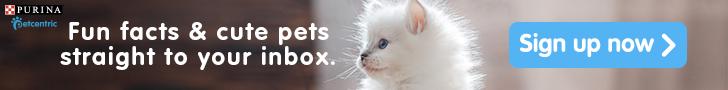 Petcentric cute cate 728