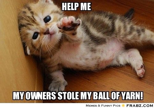 Help me! My owners stole my ball of yarn!