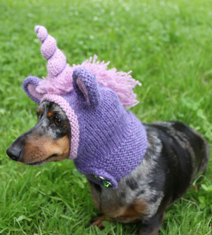 Knitting Pattern for Unicorn Dog Hood